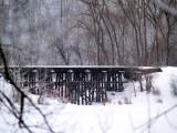 Winters Beauty11