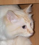 Milo Found a Cubby Hole in My Desk.jpg