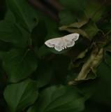 Moth 1 by one half Inch_1