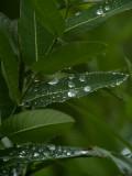Soaking up the Rain