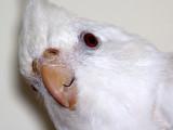 That Crazy Bird O' Mine