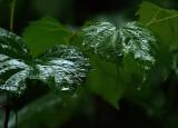The Rain Came Falling Down