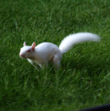 Hurray! We Have a New Albino Baby!