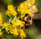 Macro Bee Test 2.jpg