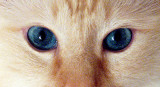 Ewww Those Eyes