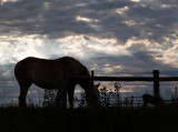 Sky and Horses