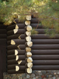 Log Layers