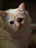 Milo-My Honey Bear