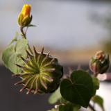 Todays Flower 3.