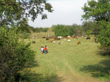 2007 Oklahoma Centennial Chisholm Trail Cattle Drive