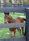 A Young Colt
