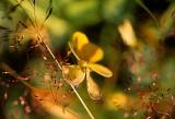 An Alpine Flower