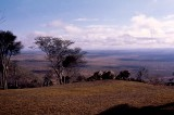 The Plains of East Africa