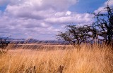The Endless Plains of East Africa