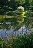 Pines Garden Pond