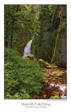 Wahchella Falls Hiding.jpg