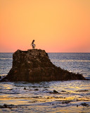 Malibu Creek State Beach pelican at sunset