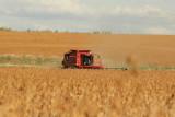 Harvest Scenery1.JPG