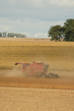 Harvest Scenery2.JPG