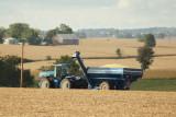 Harvest Scenery3.JPG