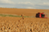 Harvest Scenery6.JPG