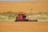 Harvest Scenery8.JPG