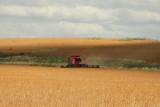 Harvest Scenery9.JPG