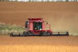 Harvest Scenery10.JPG