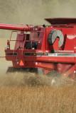 Harvest Scenery11.JPG