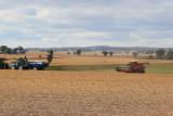 Harvest Scenery12.JPG