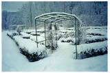 Espalier Rød Manor - Winter