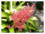 Red flowers1.jpg