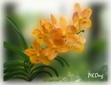 orange orchids1.jpg