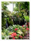 Orchids in waterfall garden.jpg