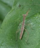 DSCF3496 on Zinnia Leaf