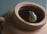 _MG_0111 Nest Builder