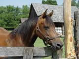 DSC02428 Horse