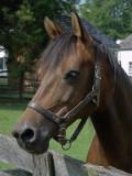 DSC02429 Horse