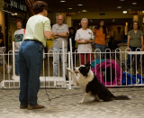 Tammy Rudd and her Wonder Dog Shebang