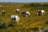 1216 Wild Mustangs