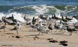 1299 Gull Convention