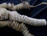 9282 Mermaids Necklace