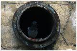 Pigeonholed