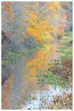 Fall Swamp Canvas
