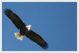 Gallery:  Eagles
