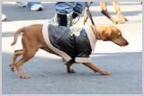 Barkus Pet Parade