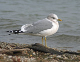 Mew Gull at South Shore Yacht Club, Milw.