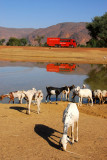 Waterhole with goats and Rotel