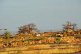 Baobabs and fields near Daga-Tereli