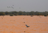 Flocks of birds taking advantage of the seasonal lake, Eastern Mali